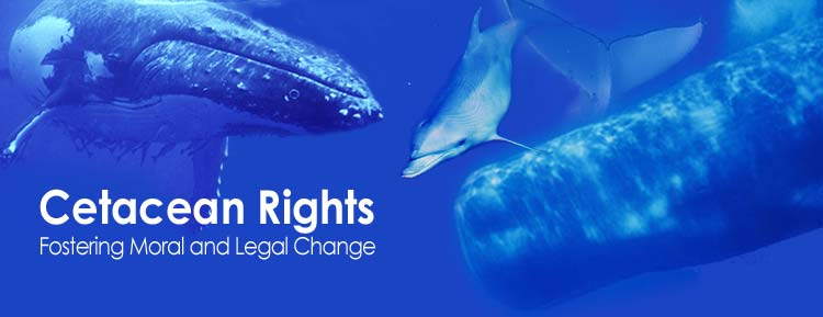 Cetacean rights